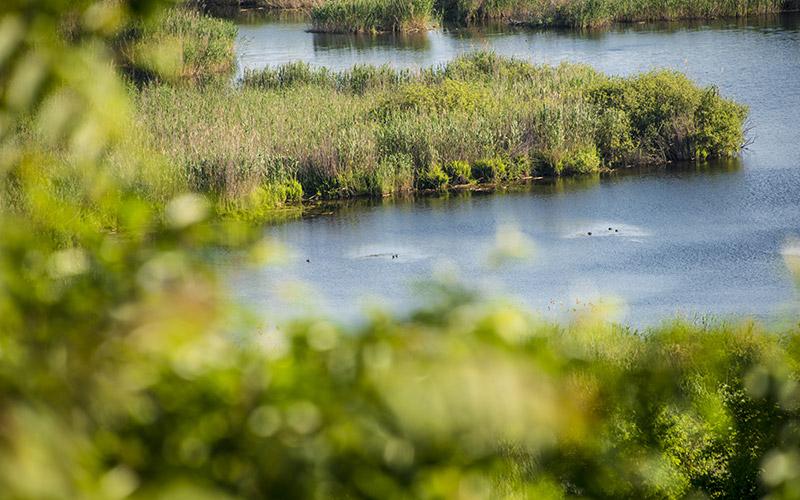 Srebarna Reserve in Bulgaria