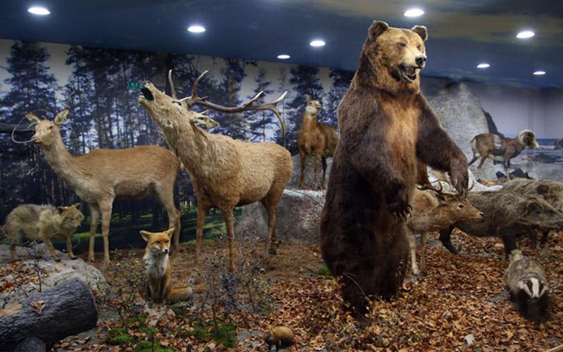 Регионален природонаучен музей Пловдив