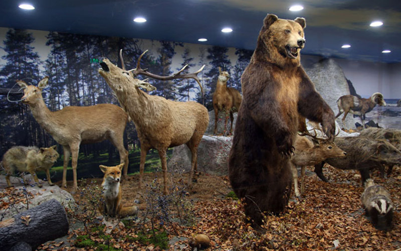Natural History Museum Plovdiv